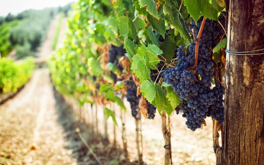 Cost Accountant search for a wine producer in the Sonoma region