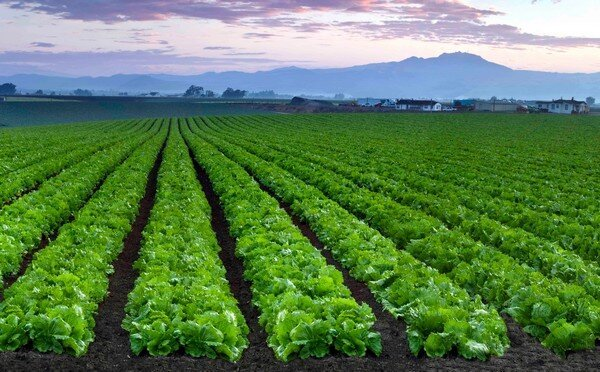 Senior Director of Human Resources Search for Agribusiness in Salinas, California.