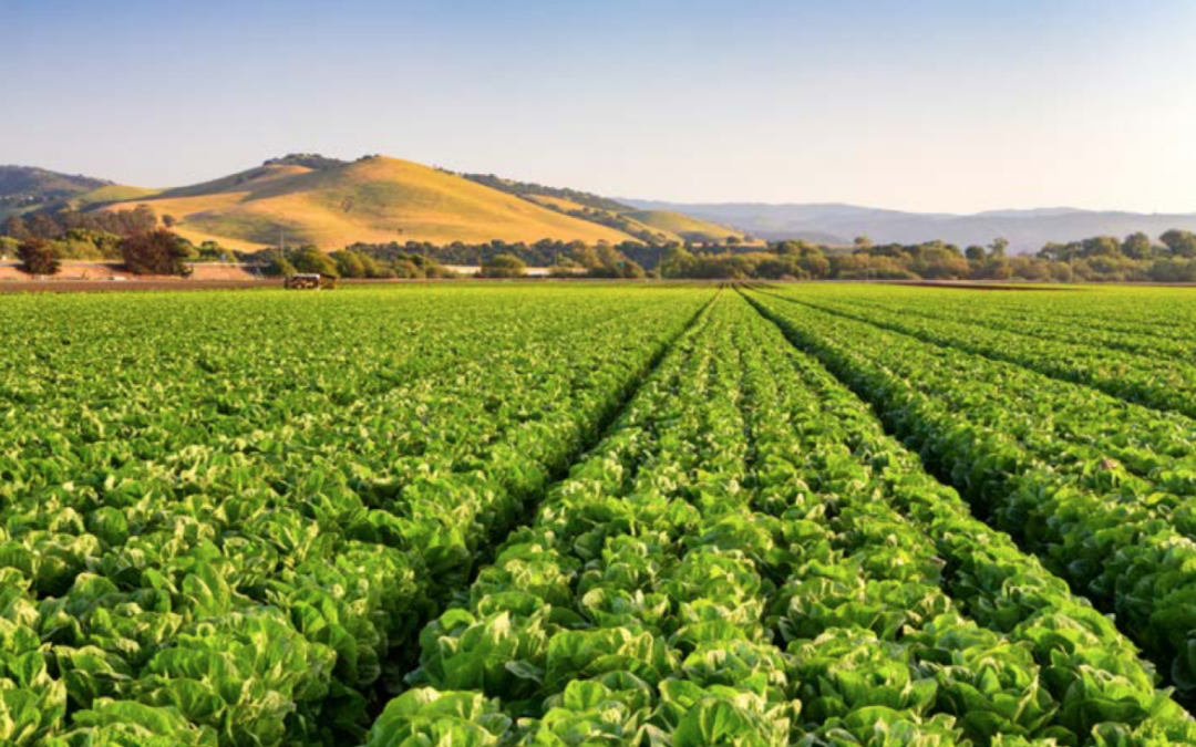 Corporate Controller Search for Agribusiness in Salinas, California
