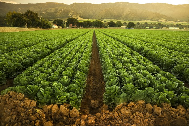 Chief Operating Officer at large produce business in Monterey County