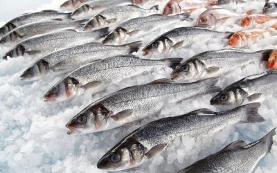Assistant General Manager search for multi-state Seafood Company